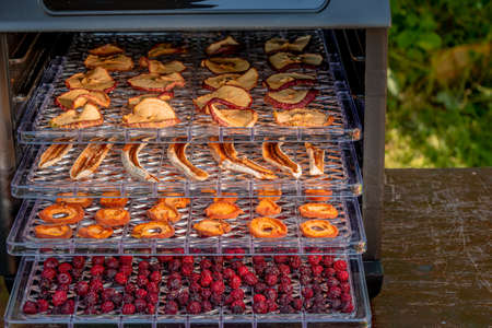 Dried fruits-apples, bananas, apricots and cherries on plastic pallets inside a home electric dehydrator