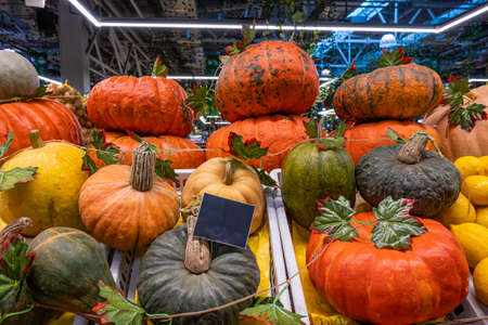 A pile of pumpkins, a stall with a ripe pumpkin close-up at a farmer's market. Copy space. Mockup. Stok Fotoğraf