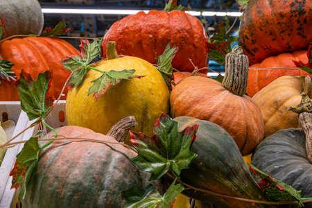 A pile of pumpkins, a stall with a ripe pumpkin close-up at a farmer's market Stok Fotoğraf