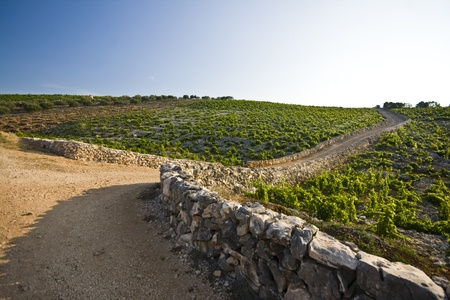 Dusty path through the hilly vineyard of Primosten Stock Photo