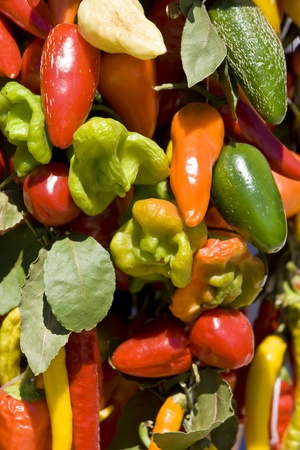 Colourful peppers photo