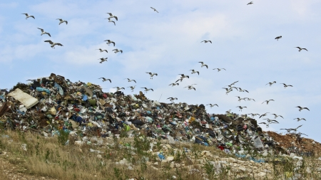 The seagulls on landfill photo