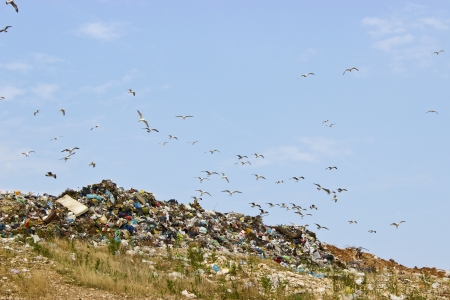 Flock of seagulls above the garbage  Stock Photo - 15248046