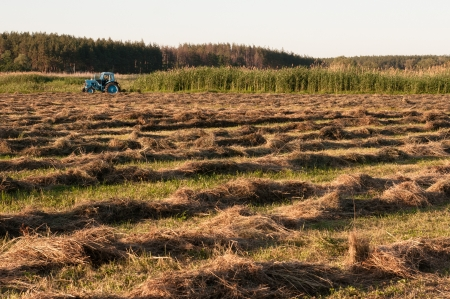 mowing grass: mown hay lies drying in the sun, preparation for winter  Tractor mowing grass Stock Photo