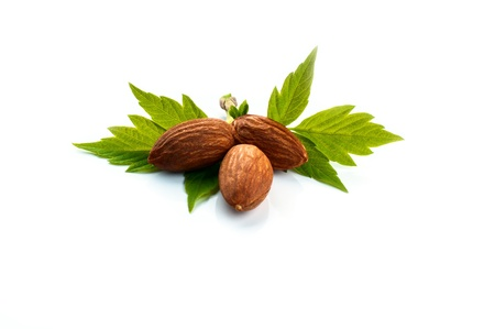 almonds with green leaves, vegetarian food, healthy lifestyle photo