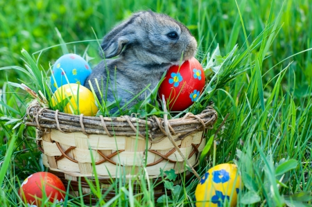 little easter bunny sitting in the grass, scattered around the decorated eggs