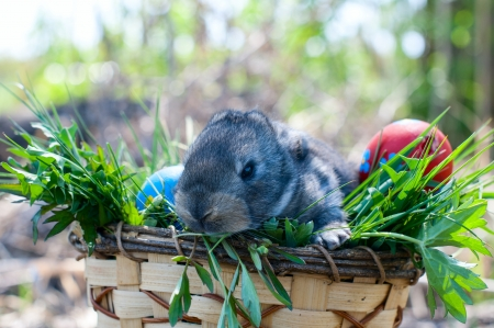 little easter bunny sitting in the grass, scattered around the decorated eggs photo