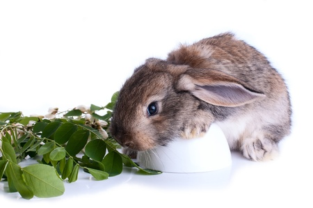 elongated: Illustrtion of a bunny sitting on a stump with green leaves  on a white background Stock Photo