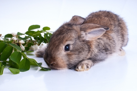 Illustrtion of a bunny sitting on a stump with green leaves  on a white background photo
