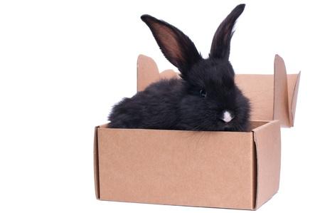 coelhinho perto da caixa com presente, isolado no branco Banco de Imagens