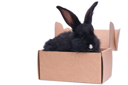 kleines Kaninchen in der N�he der Box mit Geschenk, isoliert auf wei�
