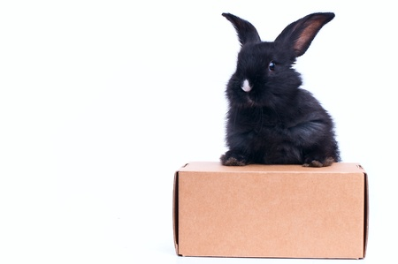 little rabbit near the box with gift, isolated on white photo