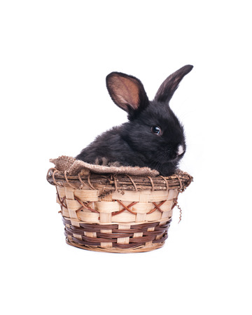 Easter bunny in an Easter, Easter