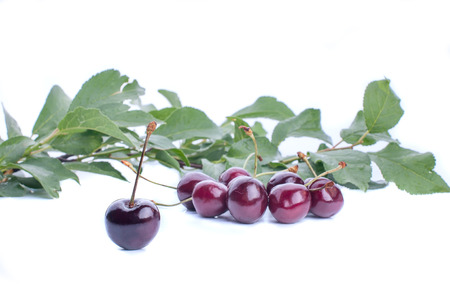 Sweet ripe cherry with leaf,nature, leaf, bright photo