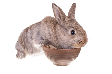 Rabbit sitting in a bowl against white background