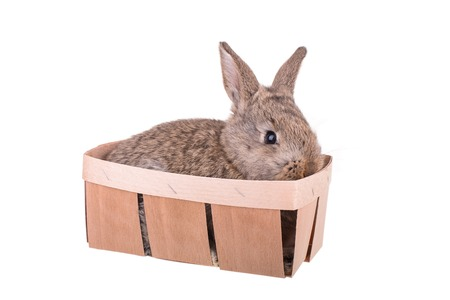 A small rabbit in a basket isolated on white background