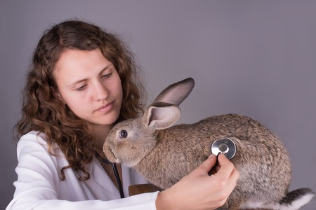A portrait of a female vet holding a rabbit photo