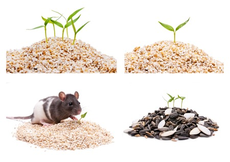 seed plant: with a big pile of seed plant grows