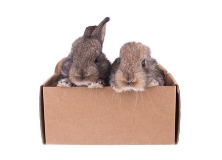coelho cinzento sentado em uma caixa de papel Banco de Imagens