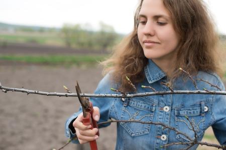 pruning scissors: Happy gardener woman using pruning scissors in orchard garden. Pretty female worker portrait with pruners