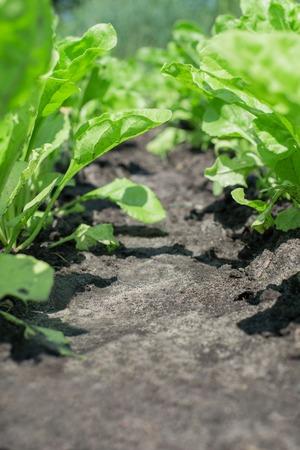 salada verde isolado em um fundo
