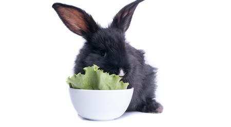 close-up of cute black rabbit eating green salad, isolated Standard-Bild - 95913718