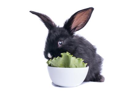 close-up of cute black rabbit eating green salad, isolated Standard-Bild - 95872992