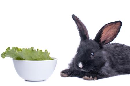 close-up of cute black rabbit eating green salad, isolated Standard-Bild - 96406427