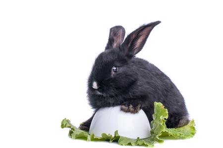close-up of cute black rabbit eating green salad, isolated Standard-Bild - 95842867