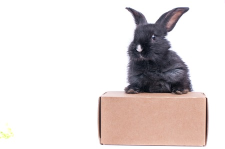 Schwarzes Kaninchen in einer Box lokalisiert auf einem weißen Hintergrund Standard-Bild - 96406429