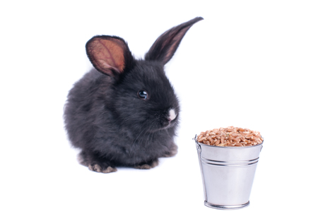 Nahaufnahme des netten schwarzen Kaninchens des weißen Hintergrundes Standard-Bild - 95872995