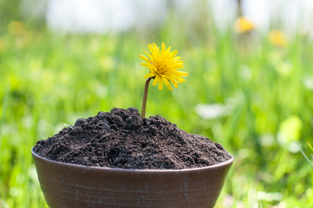 The seedling are growing from the rich soil to the morning sunlight that is shining, ecology concept. Stock Photo