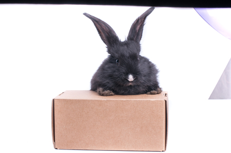 Black rabbit in a box isolated on a white background.