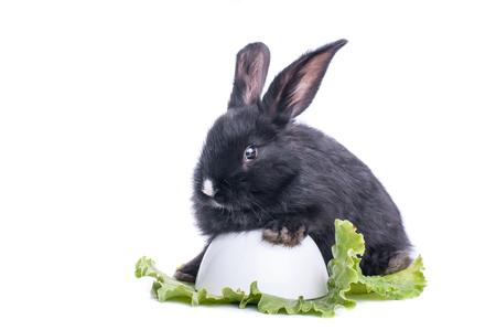 close-up of cute black rabbit eating green salad, isolated Standard-Bild - 100456617