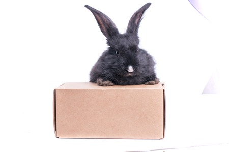 Black rabbit in a box isolated on a white background. Standard-Bild - 101549381
