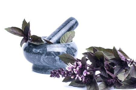 Fresh spices and herbsisolated on white background cutout. red basil leaves. Standard-Bild - 101530759