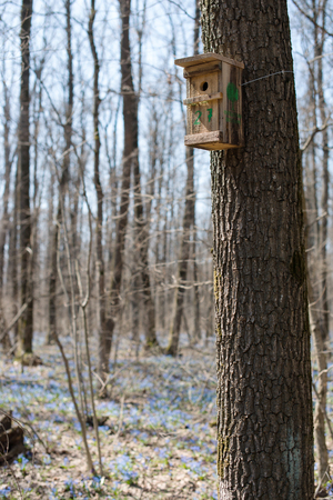 Hand made wooden birdhouse on tree in the forest.