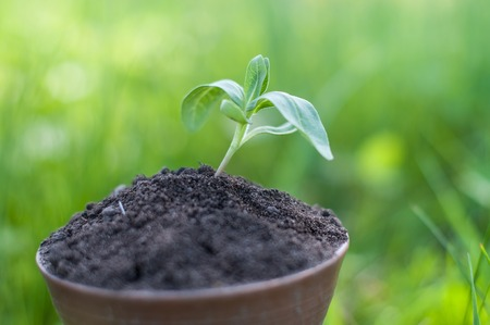 The seedling are growing from the rich soil to the morning sunlight that is shining, ecology concept. Standard-Bild - 101549385