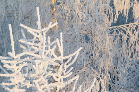 hoarfrost: Trees and bushes in white frosty hoarfrost Stock Photo