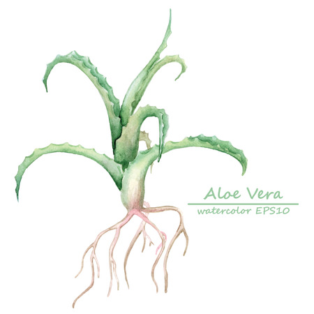 aloe vera plant: watercolor olive branch card template. hand-drawn isolated illustration