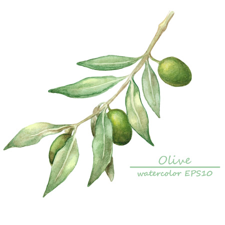 water on leaf: watercolor olive branch card. hand drawn illustration