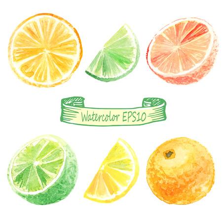 손 수채화 그림을 그려. 감귤 세트. 오렌지, 라임, 레몬, 자몽