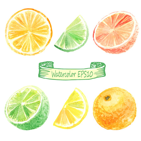 hand getekende aquarel illustratie. Citrus set. sinaasappel, limoen, citroen, grapefruit Stock Illustratie
