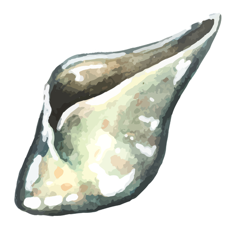 watercolor hand drawn sea shell