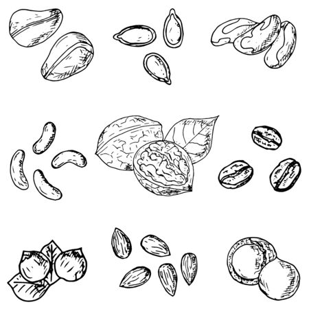 Set of hand-drawn nuts and seeds. Vector cartoon illustrations. Vetores