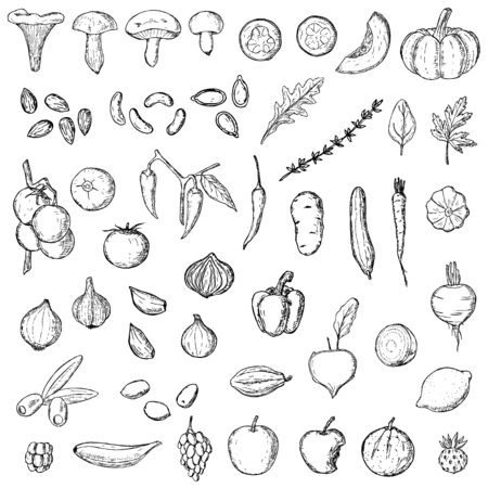 Hand-drawn collection of vegetarian food. Vector cartoon illustrations. Mushrooms, nuts, fruit and vegetables. Isolated objects on a white background. Иллюстрация