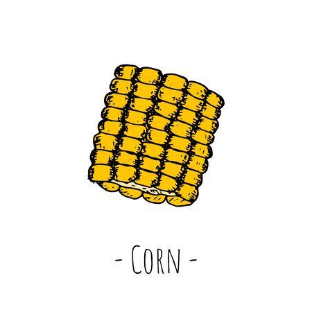 Hand-drawn isolated corn. Vector cartoon illustration.