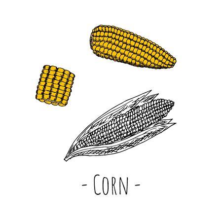 Corn. Vector cartoon illustration. Hand-drawn style.