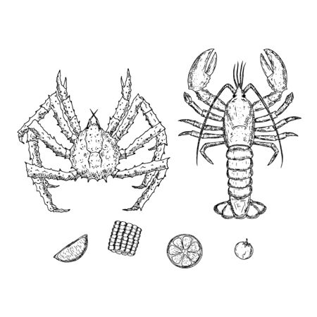 King crab and lobster. Vector cartoon illustrations. Hand-drawn style. Top view. Illustration