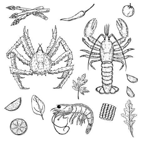 Conjunto de mariscos dibujados a mano. Crustáceos. Ilustraciones de dibujos animados vectoriales.